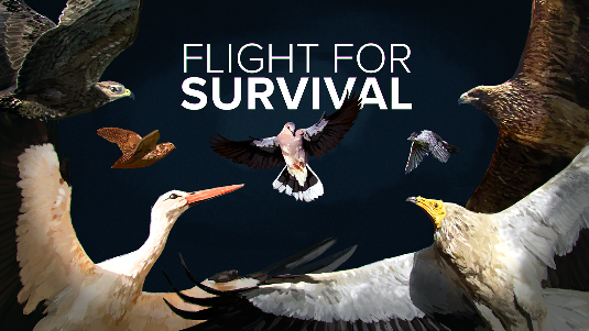 LIFE Against Bird Crime – Support to the implementation of the EU Biodiversity Strategy: raising awareness and strengthening the capacity to combat bird poaching in priority countries LIFE17 GIE/NL/000599